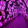 写真: ピンクのトンネル