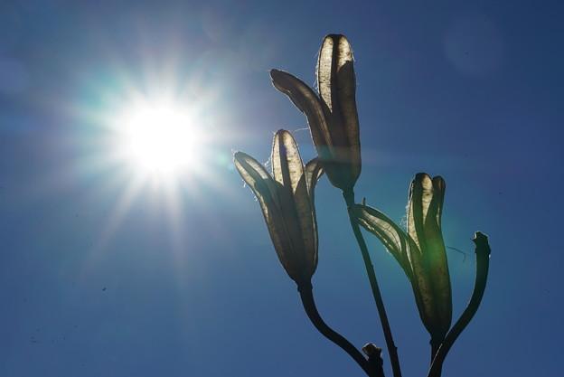 写真: 種と太陽