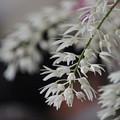 写真: 白い蘭