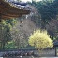 写真: コリア庭園