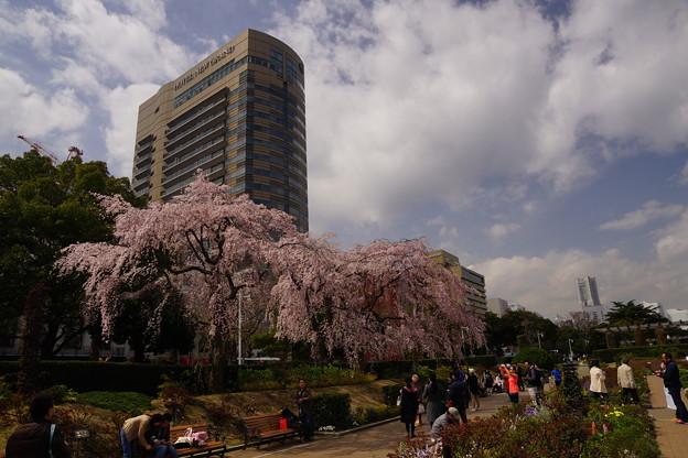 写真: 山下公園