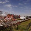 Photos: 春の赤レンガ倉庫