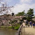写真: 春の三渓園