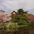 Photos: 睡蓮池