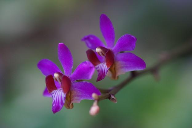 写真: 蘭の花