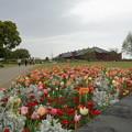 写真: 花と赤レンガ倉庫