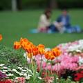 写真: 山下公園の花壇