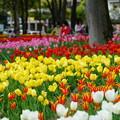 写真: 春の横浜公園