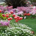 写真: 山下公園花壇