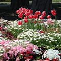 山下公園花壇