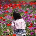 写真: 花畑の少女