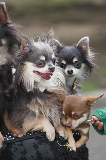写真: ペット犬