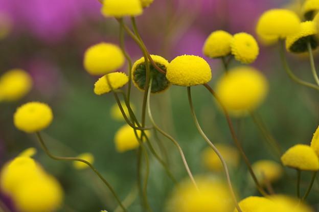写真: 花ほたる