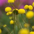 Photos: 花ほたる