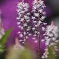 写真: 花壇の花