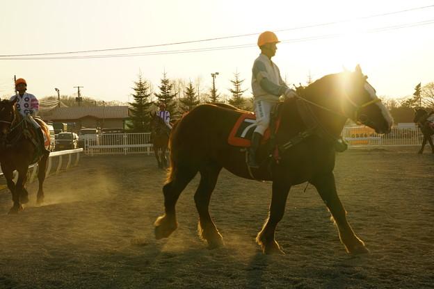 パドックの騎手と馬