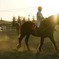 写真: パドックの騎手と馬