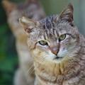 写真: 二匹の野良猫