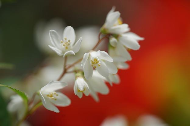 写真: 烏の花