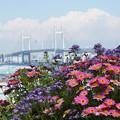 写真: 花とベイブリッジ