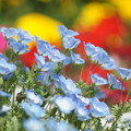 写真: 花のある風景