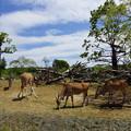 アフリカのサバンナ