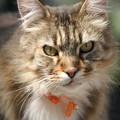 写真: 近所の猫