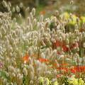 写真: 群れる花々