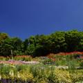 写真: 花と新緑