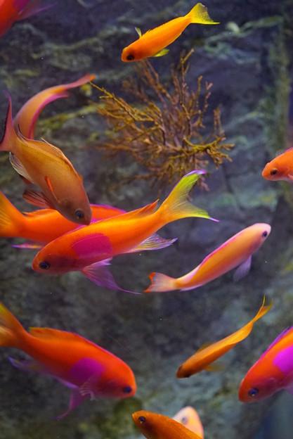 写真: 魚達