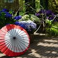 傘と紫陽花
