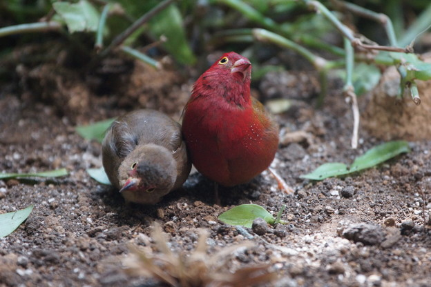 Photos: 二羽の小鳥