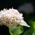 写真: カラス葉