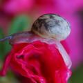 写真: 蝸牛