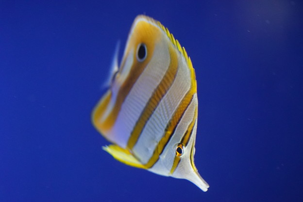 写真: 熱帯魚