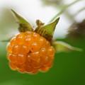 Photos: モミジイチゴ