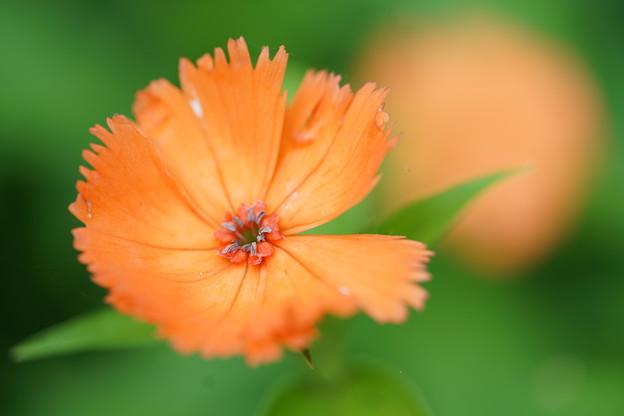 写真: オレンジ色の花