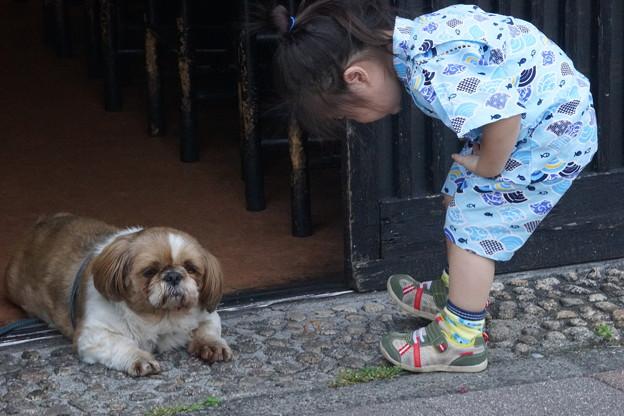 写真: 犬さん今日は