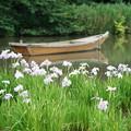 写真: ハナショウブと船
