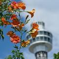 写真: ノウゼンカズラとタワー