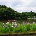 Photos: 初夏の三渓園