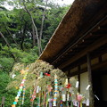 Photos: 三渓園の七夕