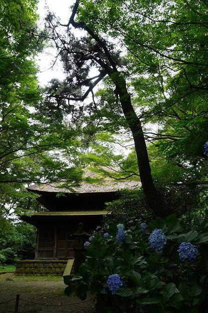 夏の三渓園外苑