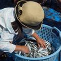 写真: 魚と子供