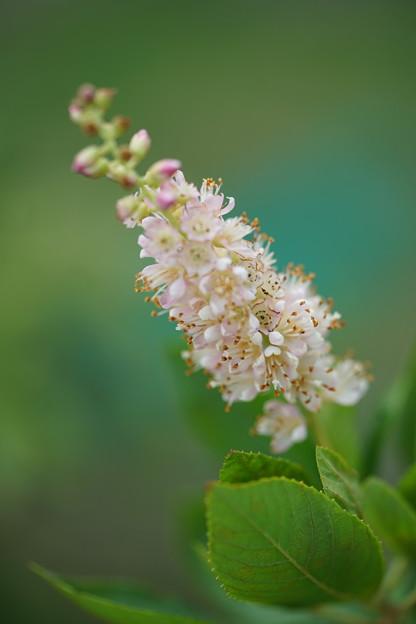 写真: 夏の花