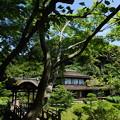 写真: 夏の三渓園内苑