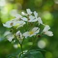 写真: 野の花
