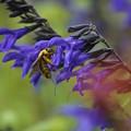 写真: 花と蜂