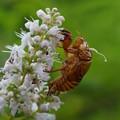 写真: 花と抜け殻