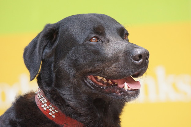 写真: 黒い犬